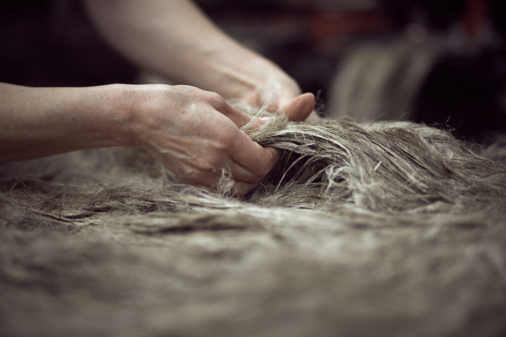 Manufacturing flax yarn-scutching