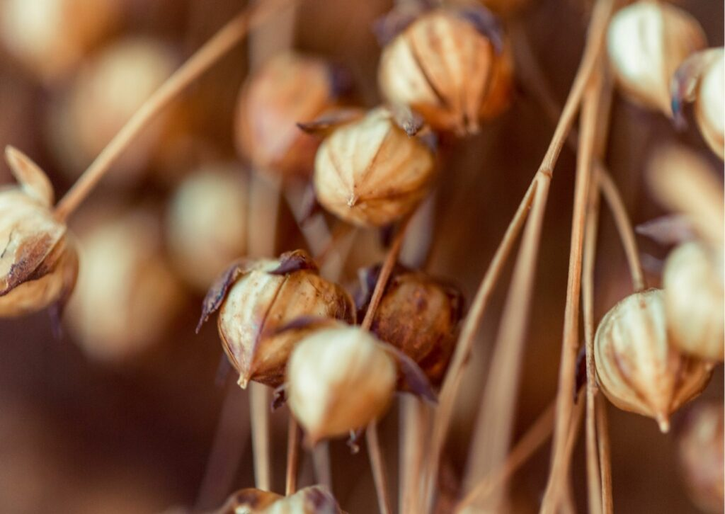 Safilin flax